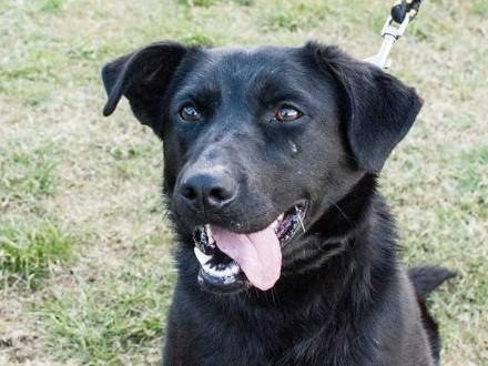 Najpozytywniejszy pies na świecie, urocza Fiolka do adopcji!
