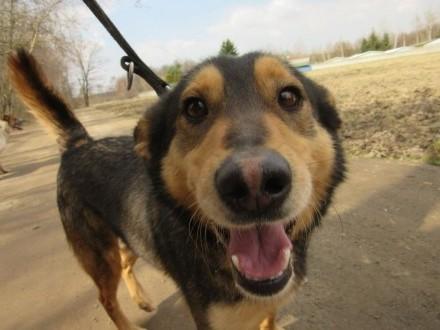Maki-wspaniały  grzeczny pies do adopcji!   śląskie Częstochowa