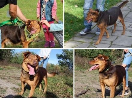 Rudy - mega sympatyczny pies   mazowieckie Warszawa