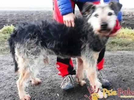 ELEKTOREK-miły  grzeczny  przyjazny nieduży psiak szuka domu  adopcja