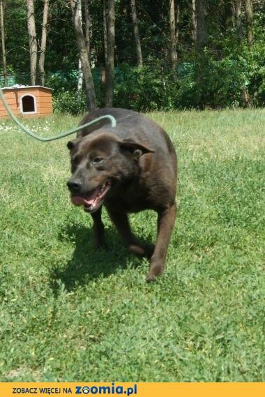 Idealny pies dla rodziny z dziećmi szuka domu