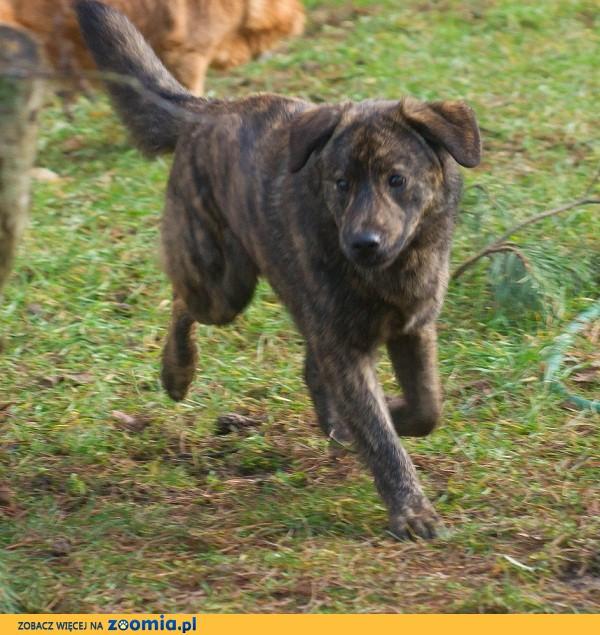 Psiak Skiper szuka domu