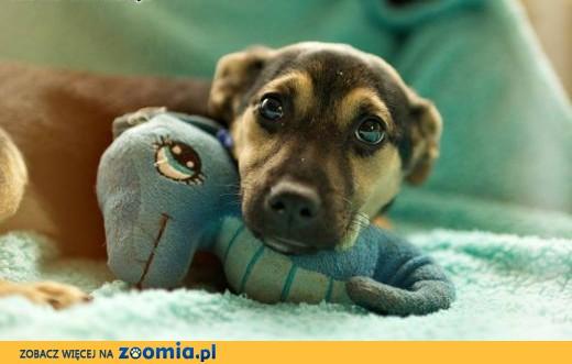 BALBINK A- urocza psia duszyczka szuka własnego koszyczka!,  mazowieckie Warszawa