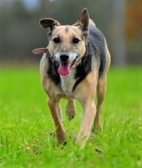 KENT - kochany psiak  przywiązany do drzewa w lesie szuka domu!   mazowieckie Warszawa