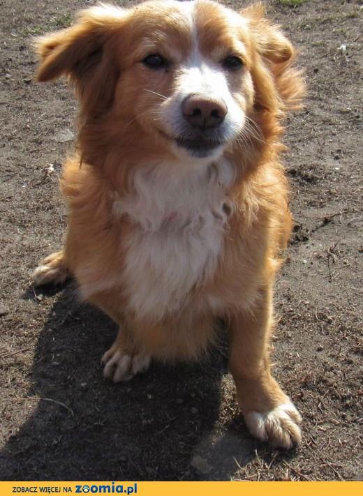 4-letni JOGI cudowny pies czeka na troskliwych opiekunów,  łódzkie Łódź