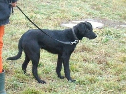 TERO 7 mies_ średni wesoły przyjazny aktywny terier mix  pies_Adopcja_