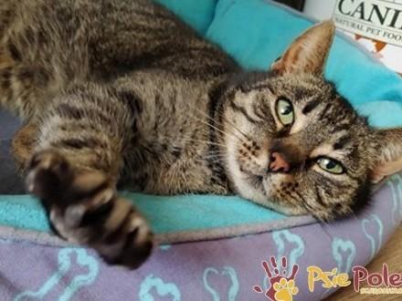KATSI-śliczna pręgowana koteczka szuka kochającego domu  adopcja