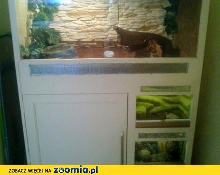 Boa dusieciel sprzedam + terrarium