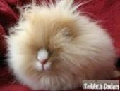 Planowany miot unikalnych królików Teddy