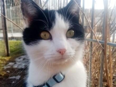 Halinka  kotka z działek  chciałaby wrócić do domu   warmińsko-mazurskie Olsztyn