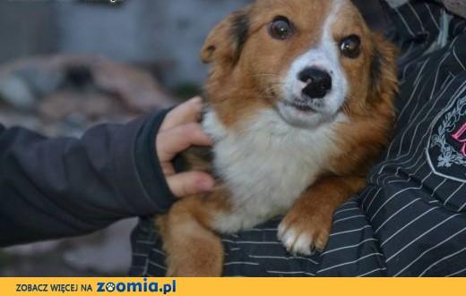 Lucky - 6lat, 5kg, spokojny, delikatny, przytulas, trafił za kraty skatowany,  dolnośląskie Wrocław