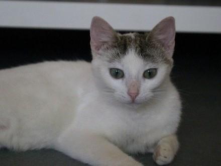 Lukrecja i Lobelia - zwykła historia zwykłych kotów