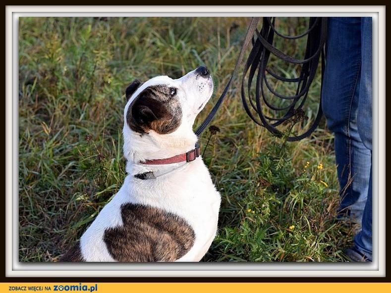 Kontaktowy, mądry pies ALBIN dla doświadczonych_Adopcja