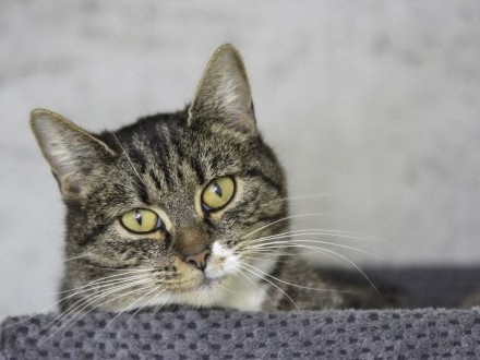 Skibka - kojąca kotka szuka domu