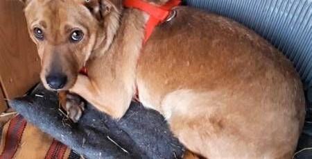 DANTE - kochany psiak  wyrzucony z samochodu  prosi o dobry dom!   mazowieckie Warszawa