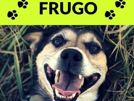 Frugo-12kg  6 lat  towarzyski i kontaktowy  przytulas  łagodny ADOPCJA