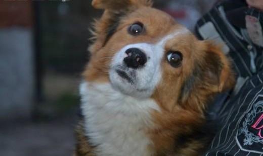 Maleńki Lucky ma szczęście że przeżył mały bohater do adopcji!   dolnośląskie Wrocław