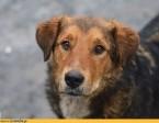Młodziutki Kapral, pies który przyszedł prosić o pomoc