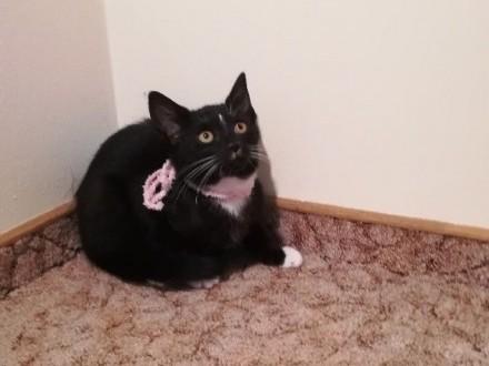 Mała kotka Łatka szuka domu