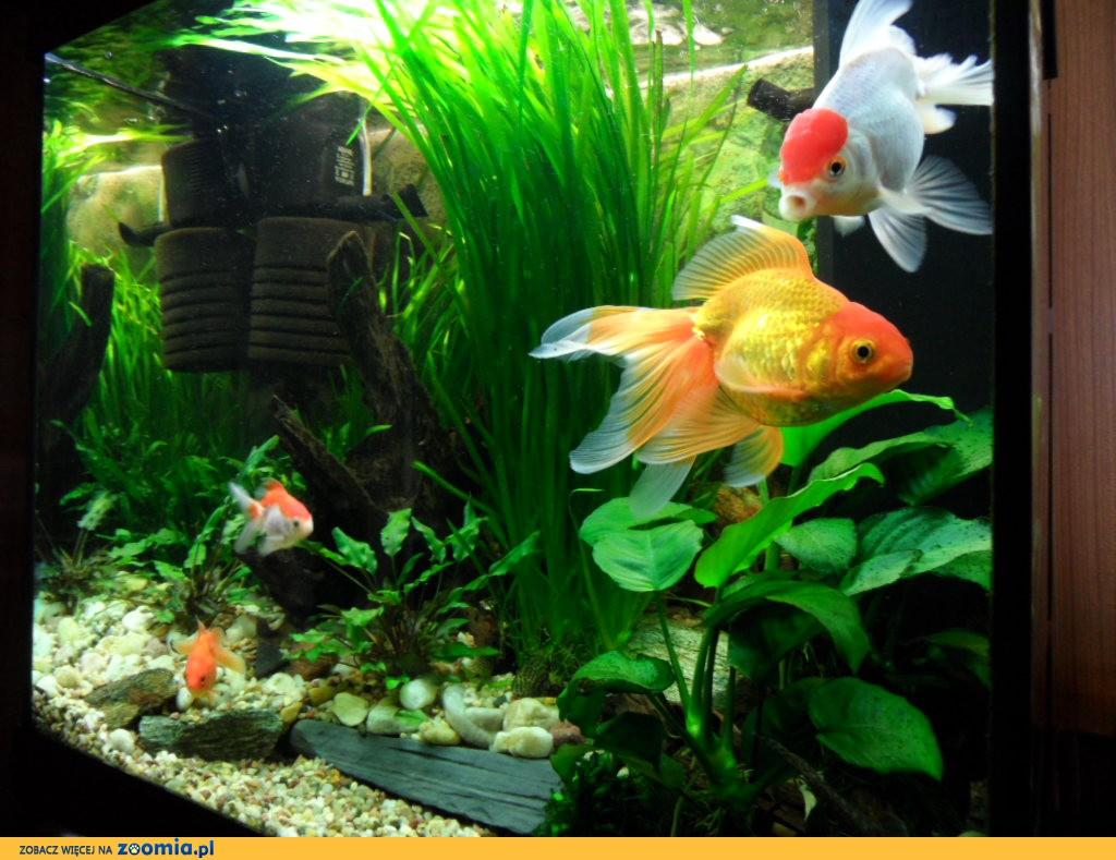Zakładanie i serwis akwarium