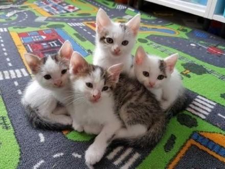 Kocia rodzinka do adopcji   lubelskie Lublin