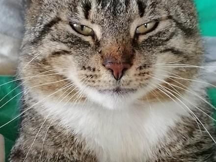 Niezwykły Kot Szuka Niezwykłego Człowieka