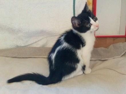 Mały kociak Gaweł szuka domu