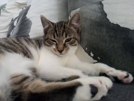 Niespełna 3 miesięczne kocię  wesoły maluszek do adopcji!