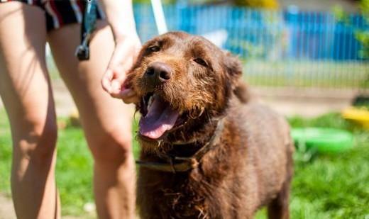 Pluto - młody pies w typie Wyżła do adopcji   wielkopolskie Poznań