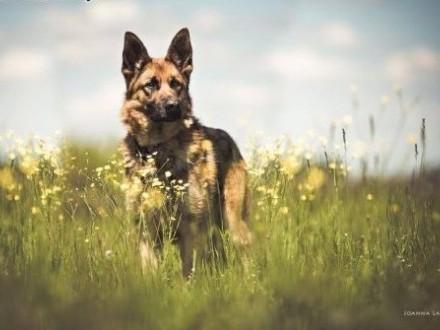 Cykor - pies z niego odlotowy i spacerowy ;)   mazowieckie Warszawa