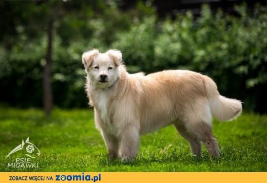 BUDYŃ - pies, który z radością obdarzy Cię miłością!,  dolnośląskie Wrocław