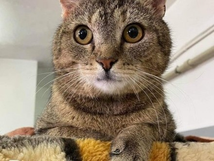 Przyjazny kotek szuka domu jako koci jedynak