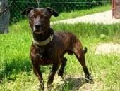 Kiwi - bardzo dobry pies :)