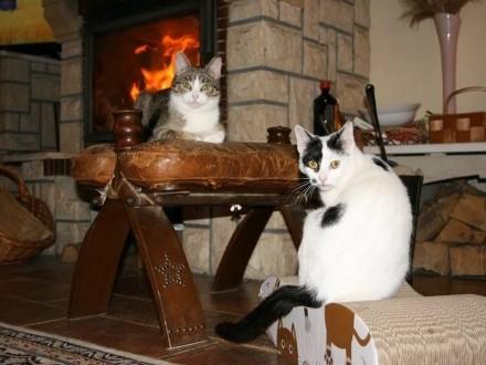 Albina i Burita szukają wspólnego domu