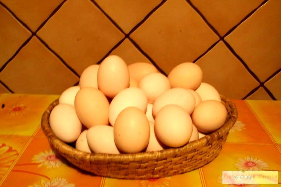 Jajka wiejskie od kur zielononóżek kuropatwianych