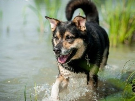 UWAGA! Pies idealny szuka domu! Oto BERCIK!   śląskie Gliwice