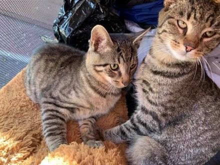 Kotki Kudłatych czekają na kochające domki