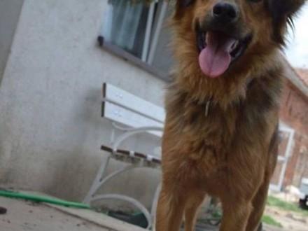 Młody Rubin  cudny  wesoły  wysportowany psiak do adopcji!   Kundelki cała Polska
