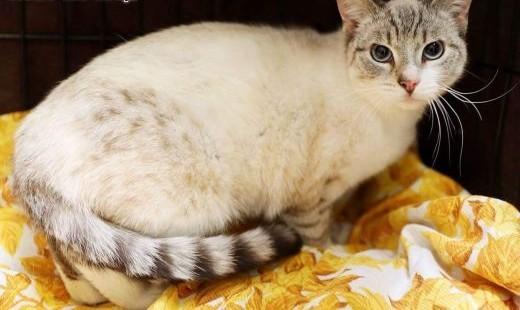 Cleo do adopcji,  śląskie Gliwice
