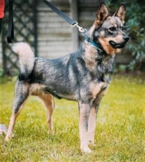 ARO - piękny psiak  porzucony na działkach szuka domu!   mazowieckie Warszawa