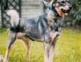 ARO - piękny psiak, porzucony na działkach szuka domu!,  mazowieckie Warszawa