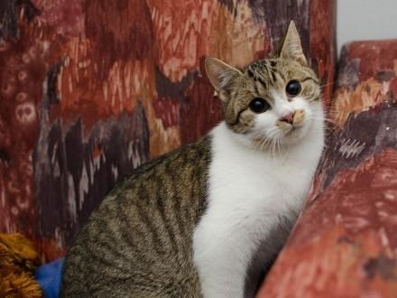 Benio - nie ma takiego drugiego kota! I on czeka na Ciebie!