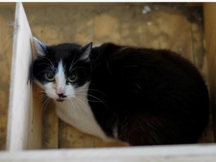 OLSZTYN: Anastazja  przerażona koteczka FeLV+  szuka dobrego domu