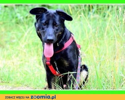Kochany HOMER średni 23 kg młody łagodny mądry psiak_Adopcja