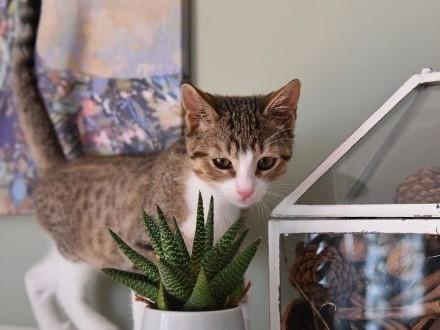 Lukas - mały kotek szuka domu