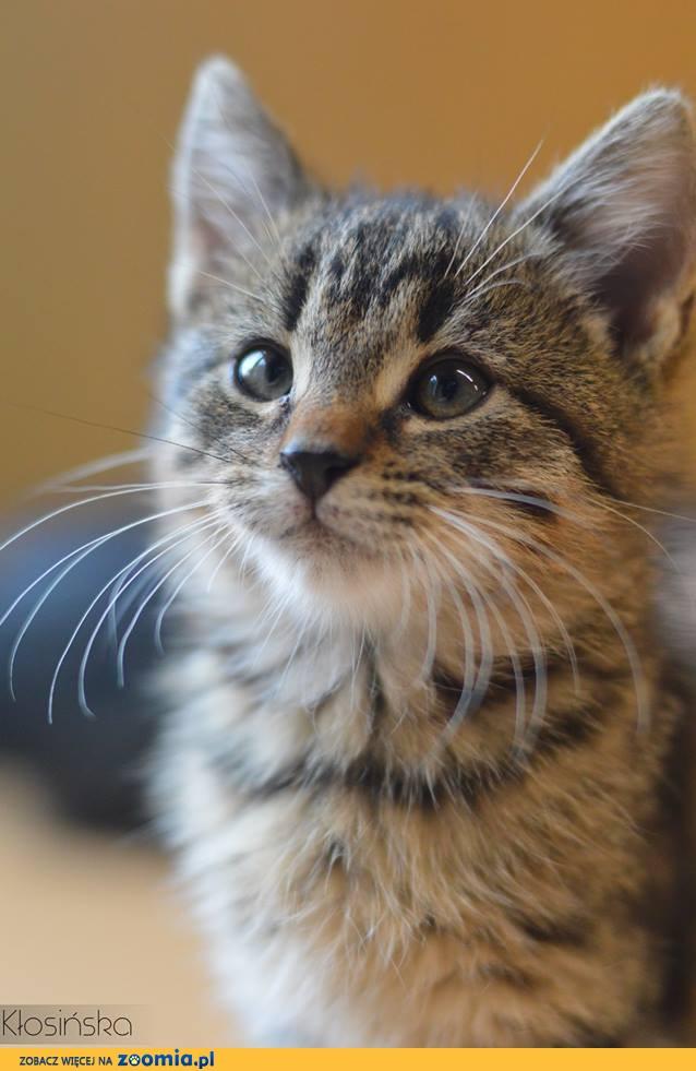 Przyjazny Wesoły Alex Mały Kociak Szuka Domu Dachowiec Oddam