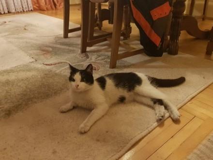 Czarno- Biała kotka szuka domu