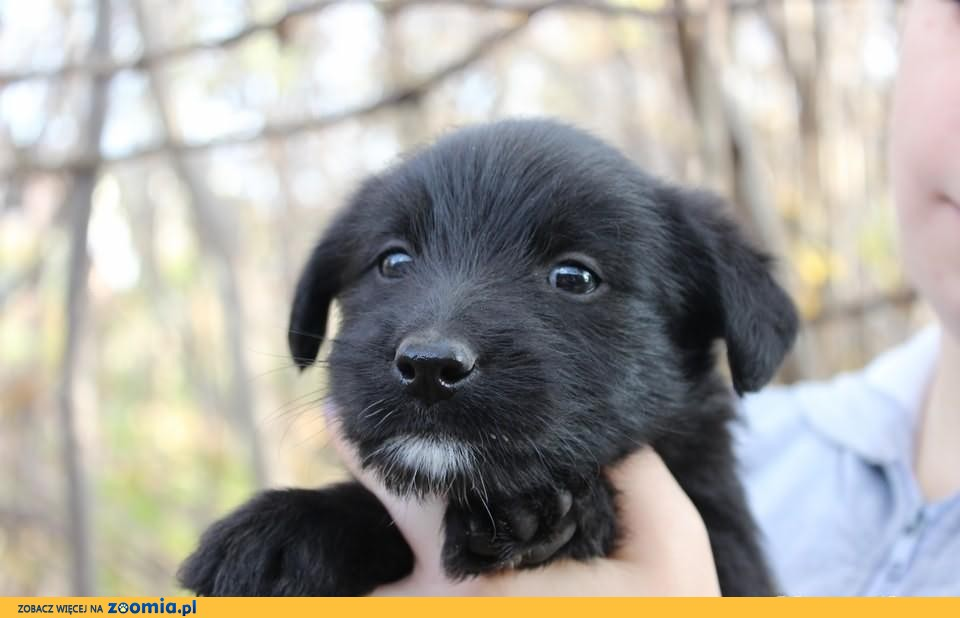 Molly - psie dziecko do adopcji! :)