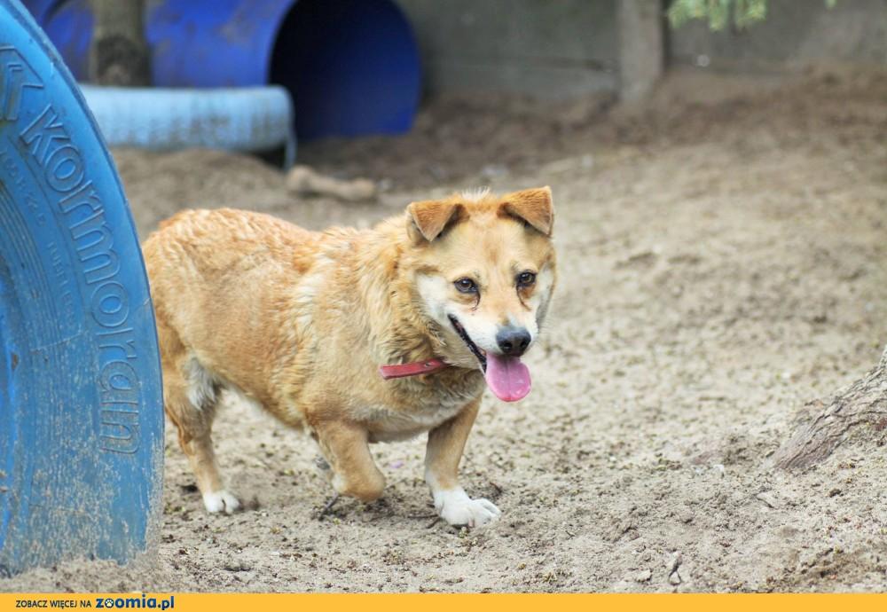 Garon - pies o zajęczym sercu
