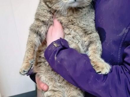 MARCYŚ-uroczy  miły  spokojny starszy kotek szuka domu  adopcja